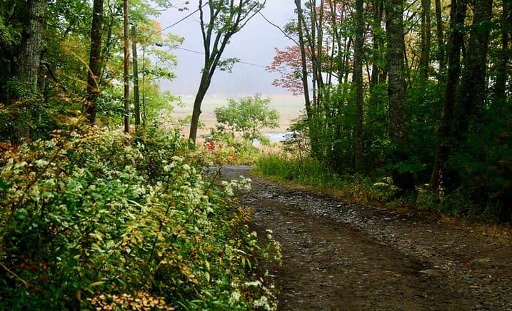 A beautiful Maine hiking trail.