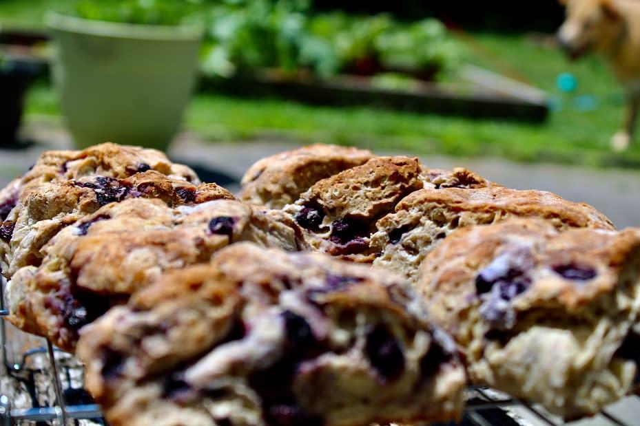 Gluten-free blueberry scones outside
